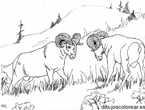 Dibujo de dos animales en el bosque  Dibujos para Colorear