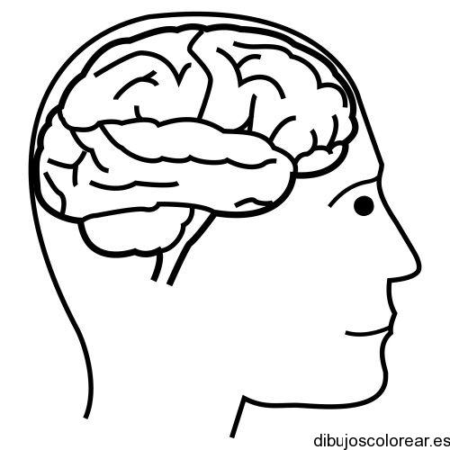 Dibujo de un cerebro humano  Dibujos para Colorear