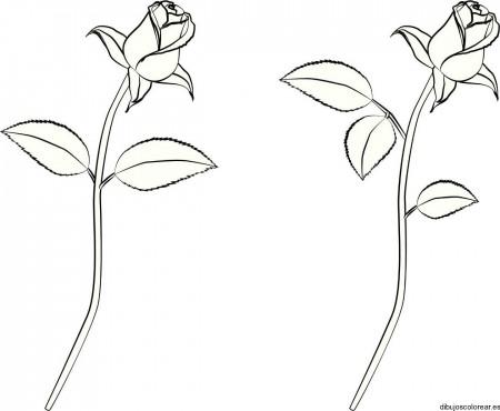 Dibujos-de-rosas-para-colorear-11