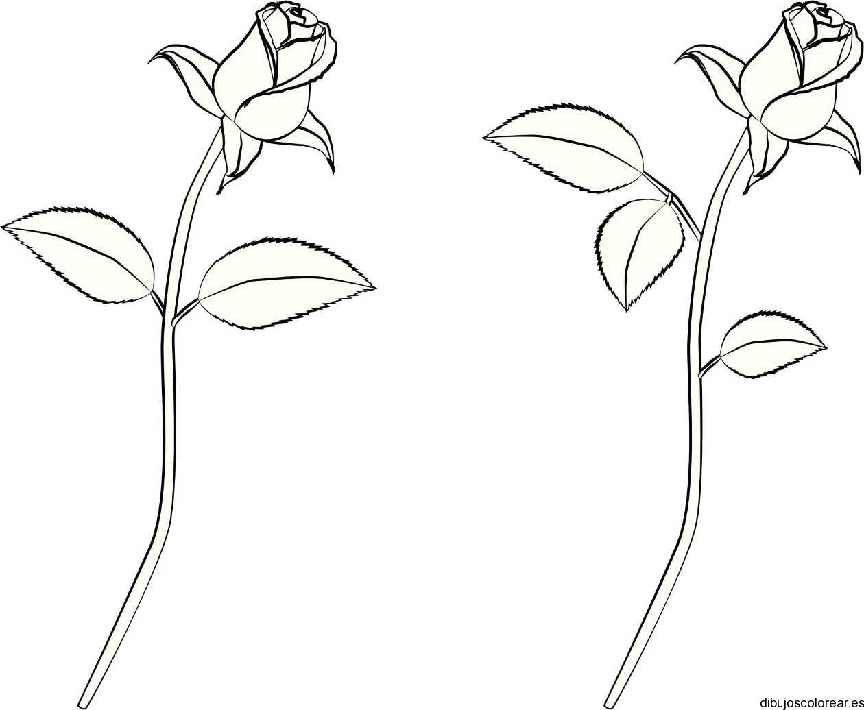 Dibujo de un par de rosas