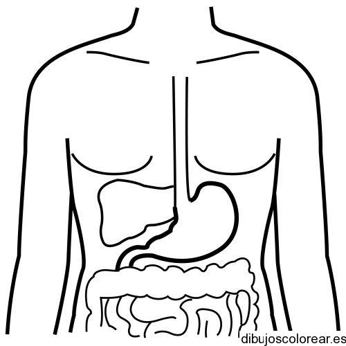 Dibujo del sistema digestivo | Dibujos para Colorear
