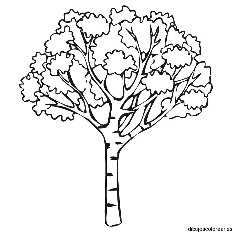 Dibujo de un árbol en otoño