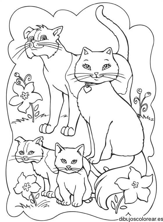 Gatos  Dibujos para Colorear