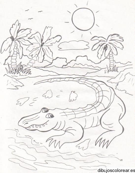 Dibujo de un cocodrilo en un lago