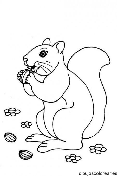 Dibujo de una ardilla comiendo nueces  Dibujos para Colorear