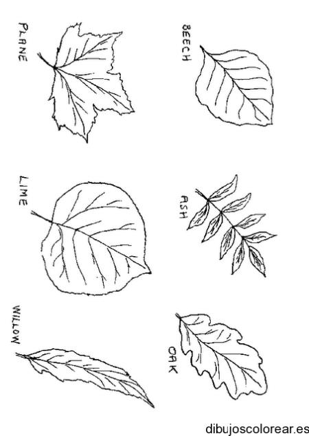 Dibujo de las clases de hojas