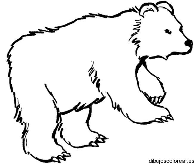 Dibujo De Un Gran Oso Polar