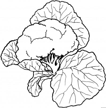 dibujos-para-colorear-verduras