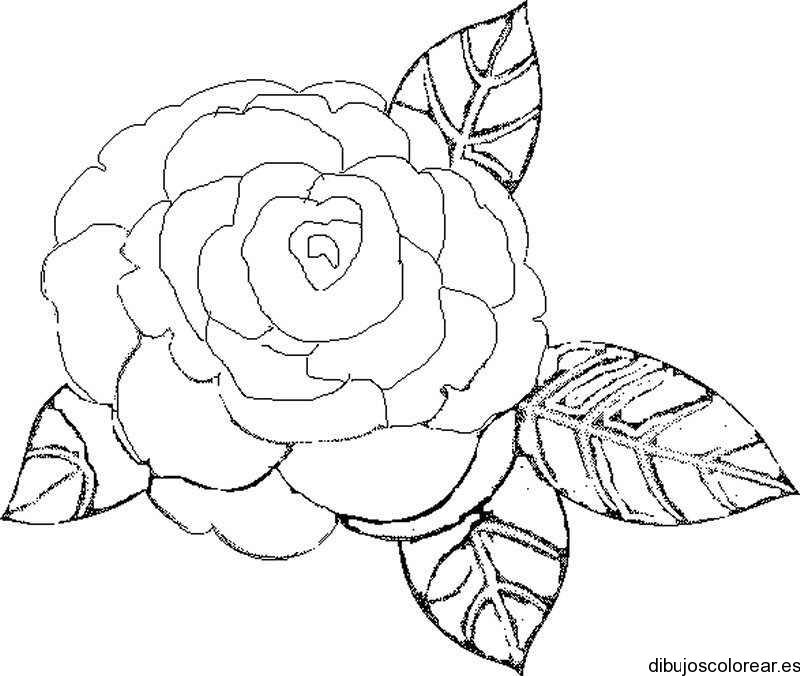 Dibujo de una rosa con dos hojas  Dibujos para Colorear