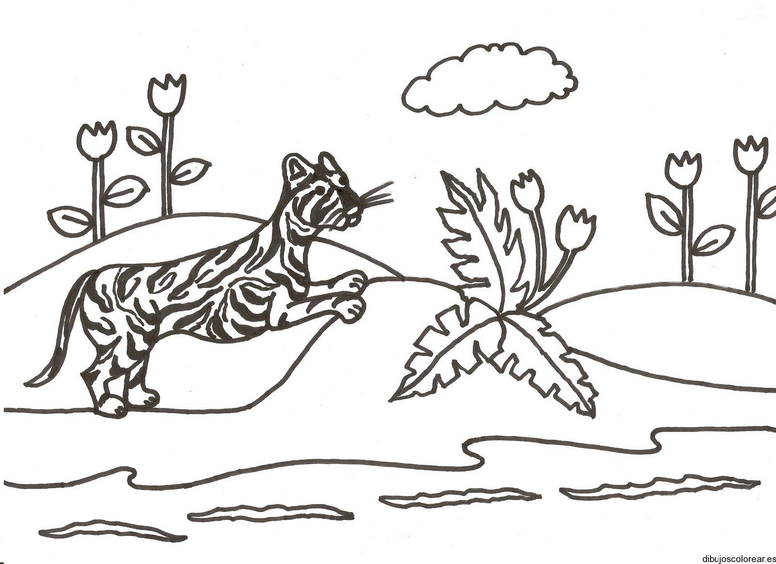 Dibujo De Un Tigre Corriendo