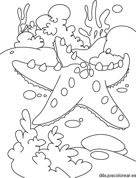 Dibujo de una estrella de mar y algas  Dibujos para Colorear