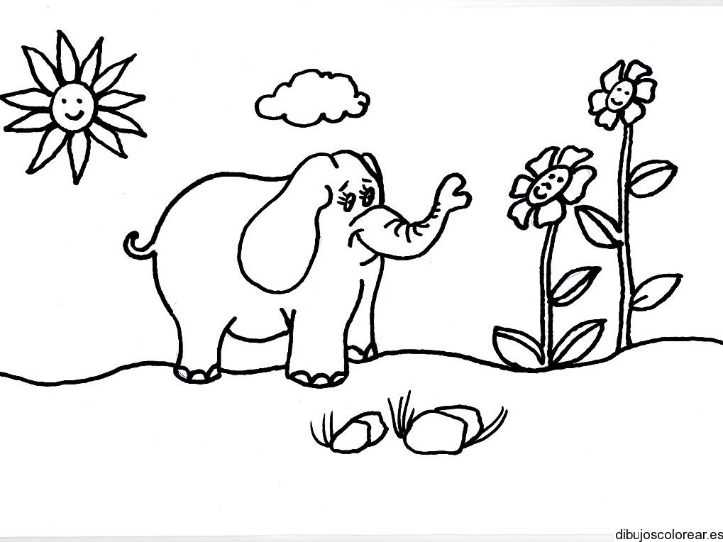 Elefantes Animados Para Dibujar Dibujo De Elefante Vergonzoso Para