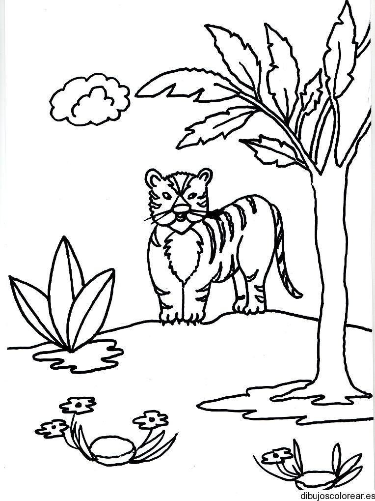 Dibujo de un tigre atrás de un árbol