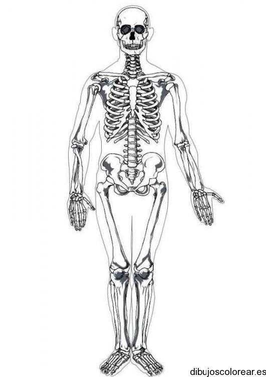 Dibujos de calaveras cuerpo completo - Imagui