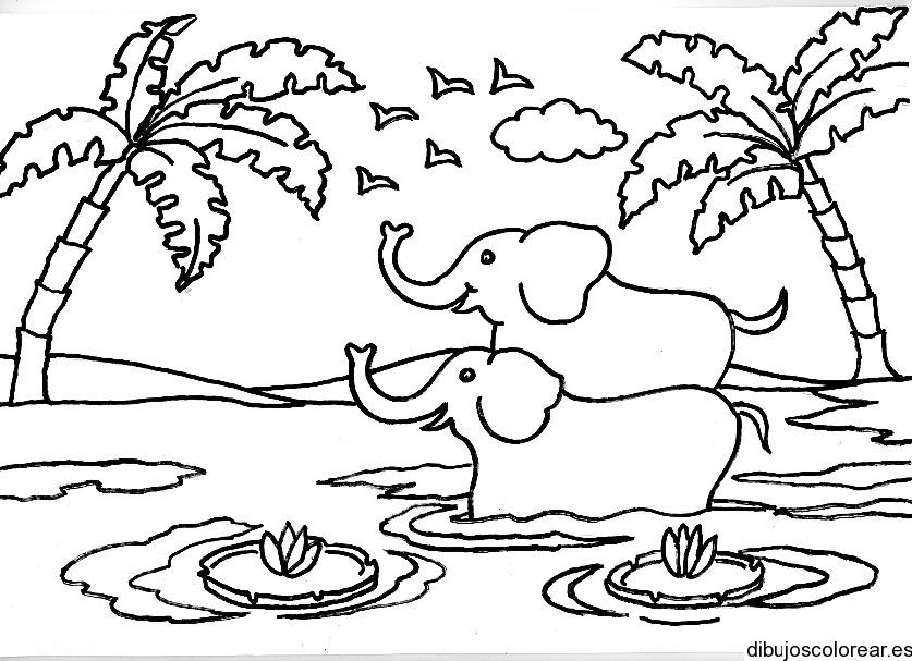 Dibujo de dos elefantes bajo palmeras  Dibujos para Colorear