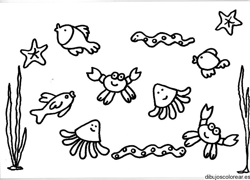 Dibujo de animales acuticos  Dibujos para Colorear