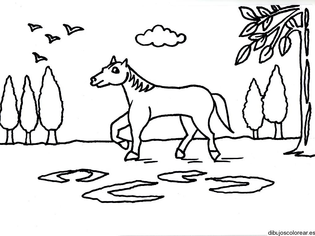 Dibujo De Un Caballo Entre Los árboles