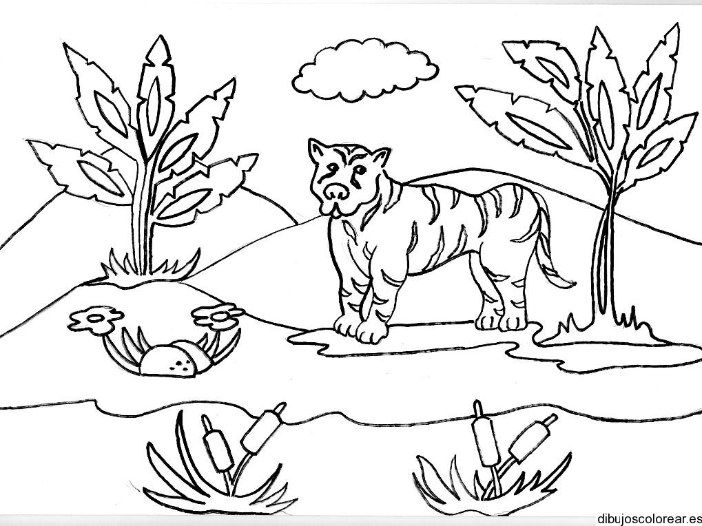 Dibujo de un tigre en la selva  Dibujos para Colorear