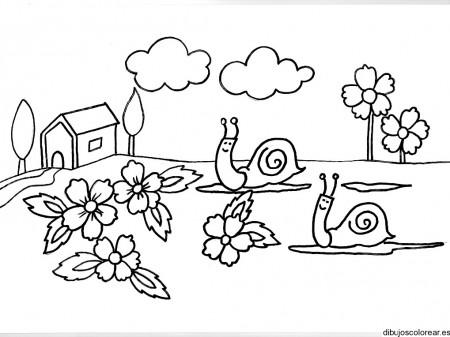 Dibujos de caracoles en el jard n for Caracoles en el jardin
