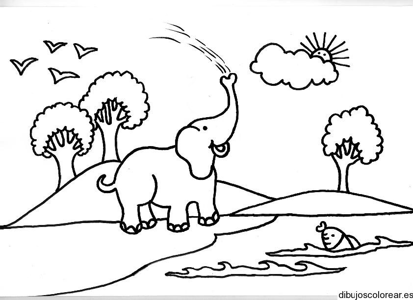 Dibujo de un elefante jugando con agua  Dibujos para Colorear