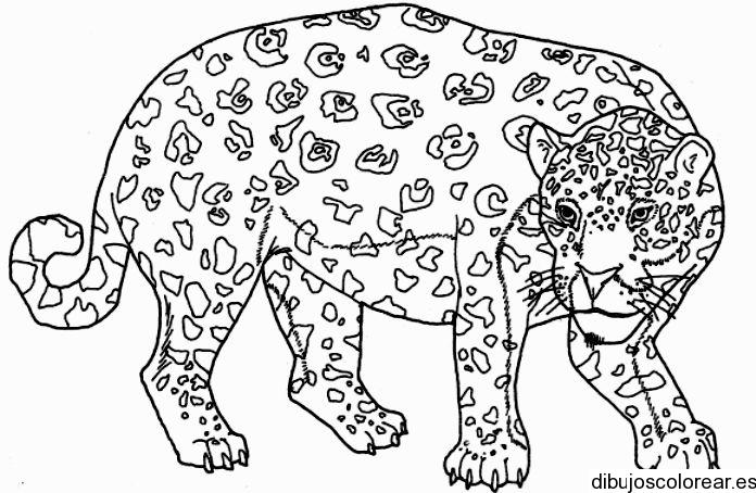 Animales | Dibujos para Colorear