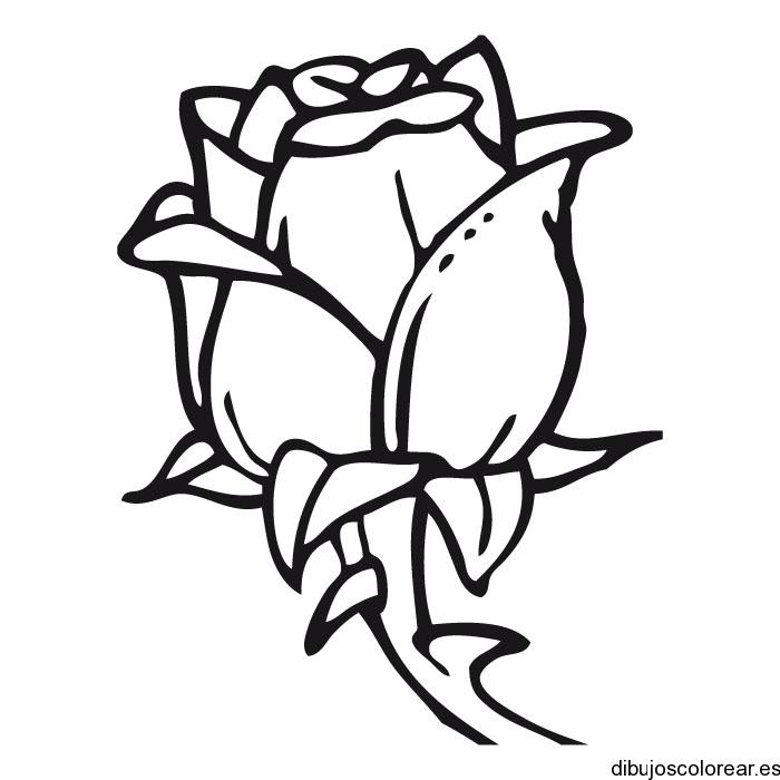 Dibujo de una rosa con espinas