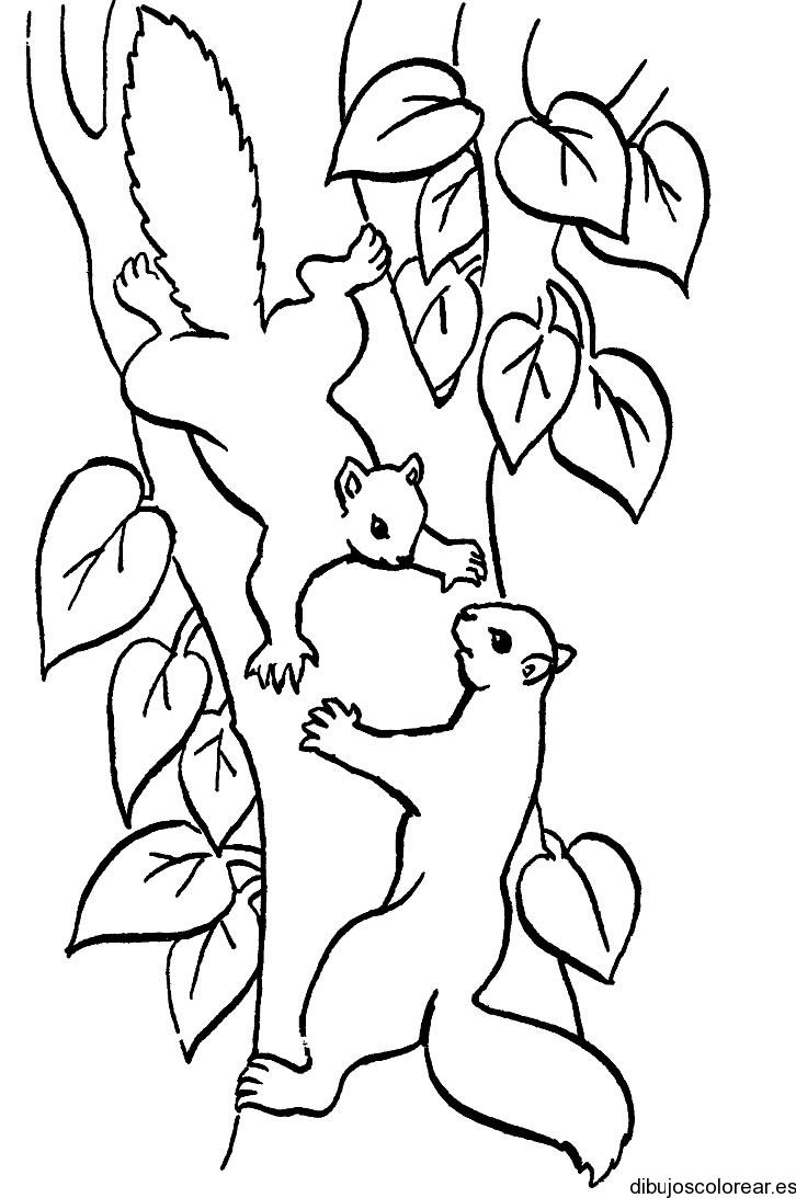 Dibujo de un mochuelo en un árbol