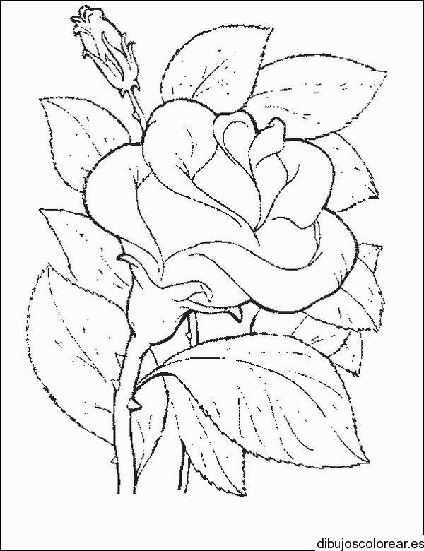 Dibujo de una guirnalda en un cuadro