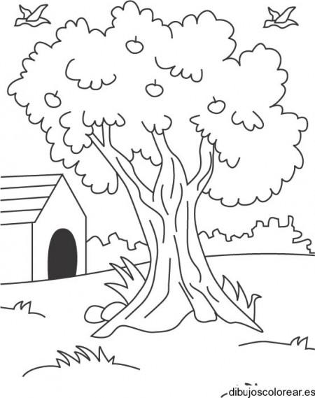 dibujar-un-arbol
