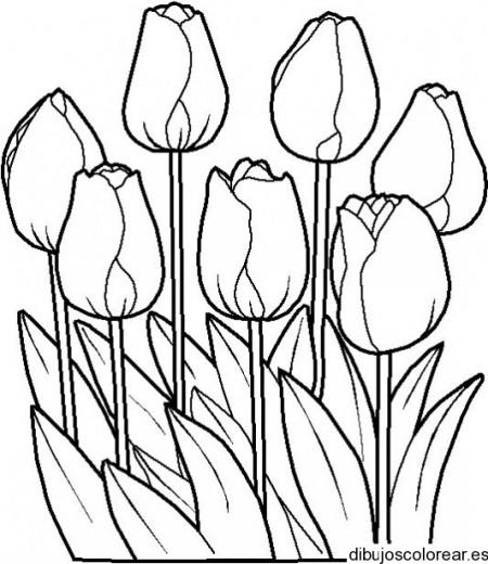 dibujos para colorear gratis (42)