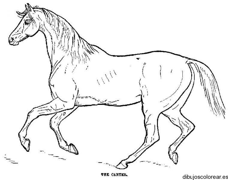 Dibujo de un bello unicornio