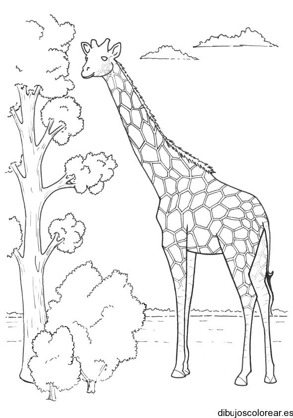 Dibujo De Una Jirafa Y Un árbol