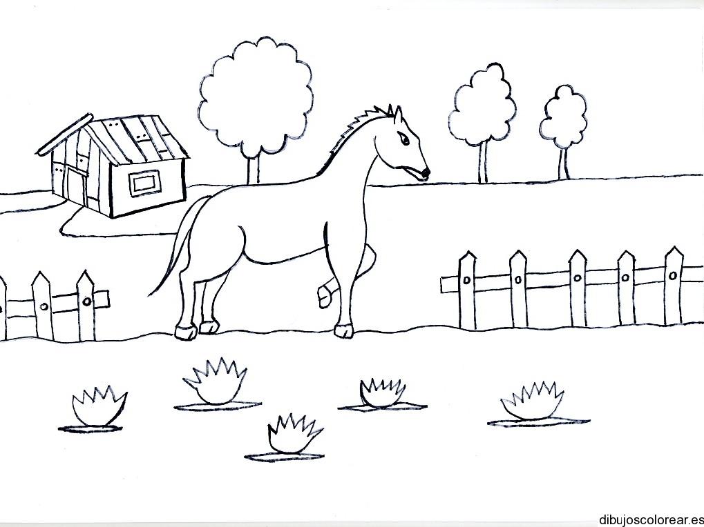 Dibujo De Un Caballo En Un Patio