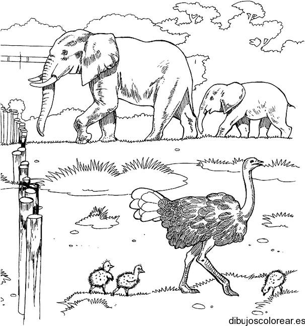 Dibujo de reserva índigena